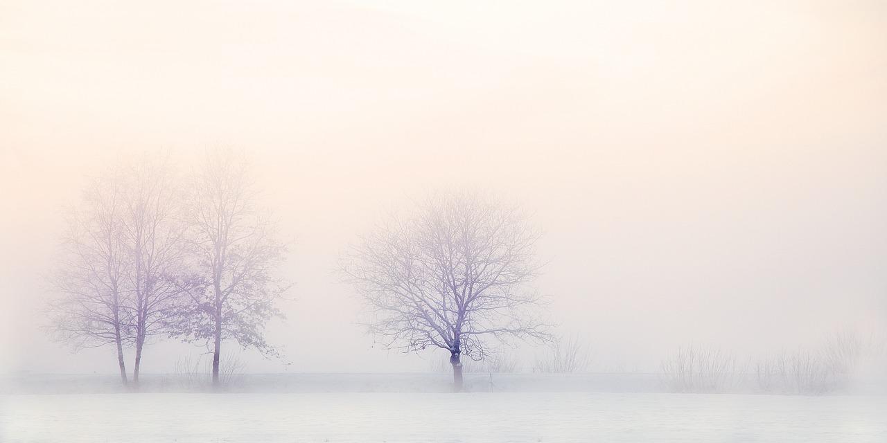 冬が嫌い、好き・・・やっぱり嫌い!