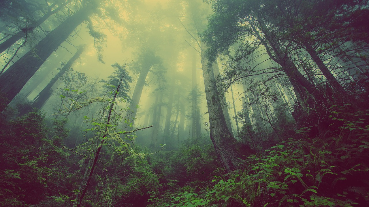 【断言】人間は環境の生き物である。
