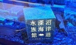 地球最後の神秘。沼津深海水族館に行ってきた